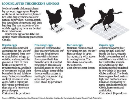 Graphic showing the difference in egg laying hens conditions.
